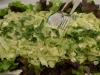 courgette-en-habit-vert